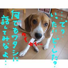 ittai_20070924134531.jpg
