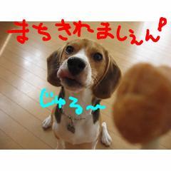 jyuru_20070910114345.jpg