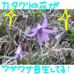 katakuri.jpg