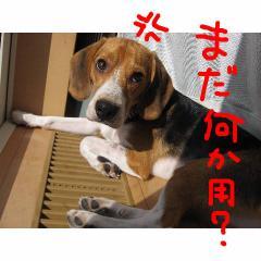 mada_20070925100012.jpg