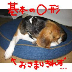 maru_20070917084741.jpg