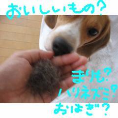 nani1_20070924134458.jpg