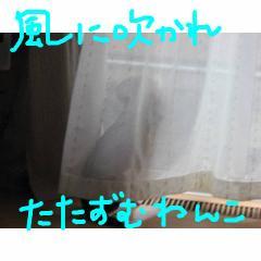 tatazumi.jpg