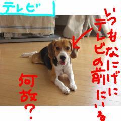 terebi_20070909094616.jpg