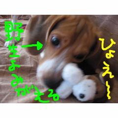 yasei.jpg