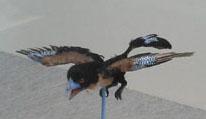 鳥恐竜02