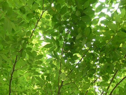 P20100517緑