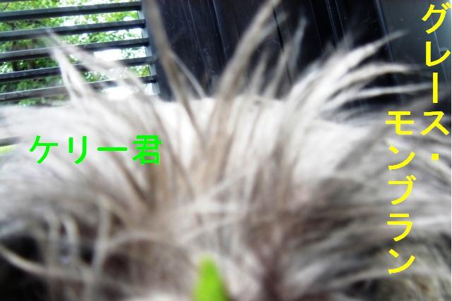 20070320020206.jpg