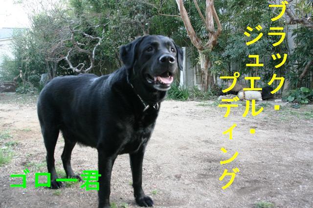 20070320020212.jpg