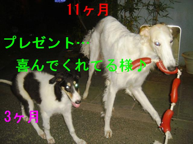 20070324133103.jpg