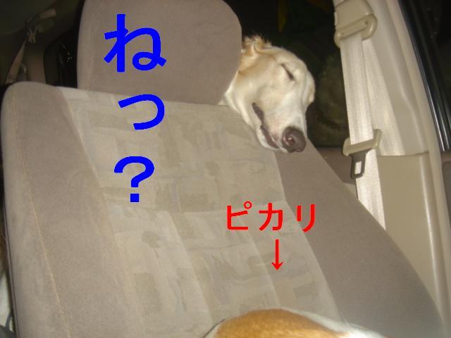 20070324133109.jpg