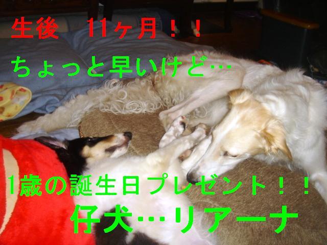 20070324133115.jpg
