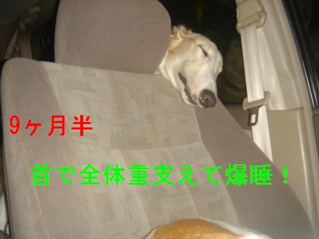 20070324133138.jpg