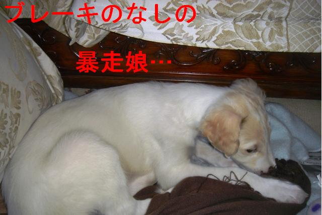 20070324141604.jpg