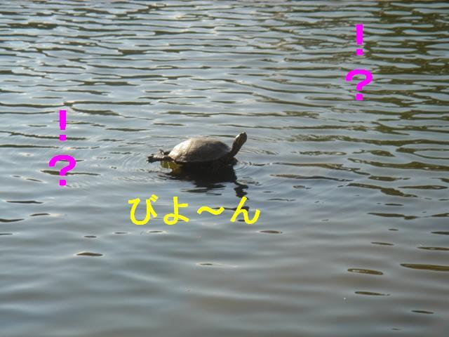 20070405122452.jpg