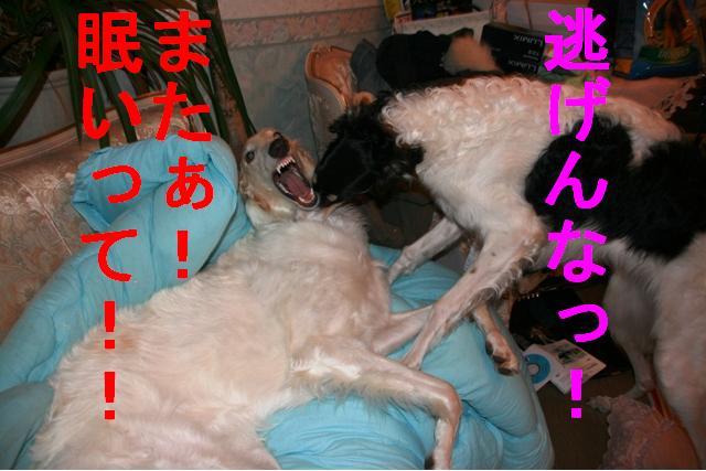 20070410041716.jpg