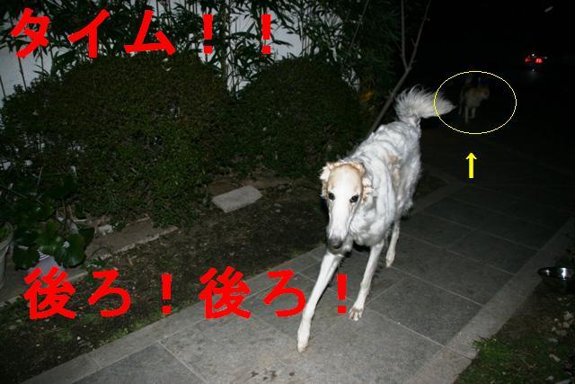 20070410041743.jpg
