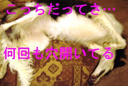 20070512015313.jpg