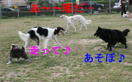20070603225811.jpg