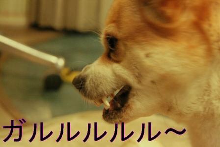 20070710094019.jpg
