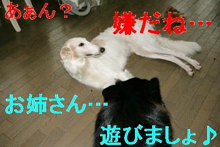 20070722130747.jpg