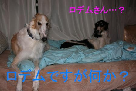 20071210005808.jpg
