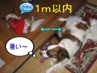 20070707135449.jpg