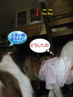 20070717221206.jpg