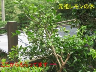 20070804171110.jpg