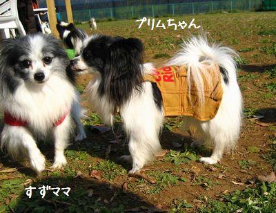 blogIMG_4463.jpg
