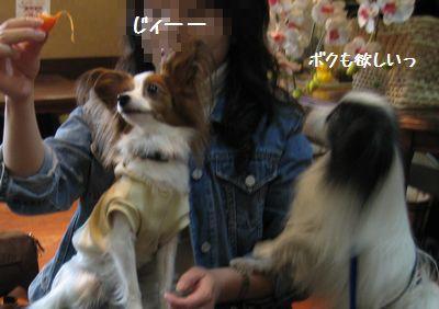 blogIMG_4580.jpg