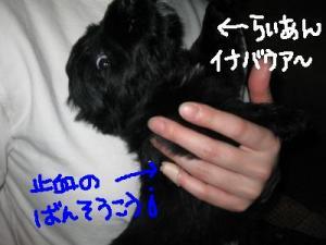 いなバウあぁ~!!