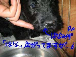 鼻たれ「大○ 栄作」?!