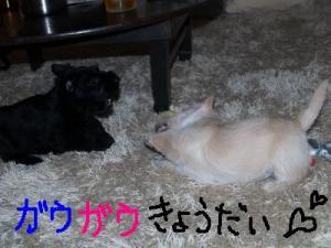 ♪ガウガウ♪