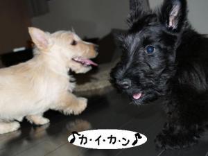♪カ・イ・カ・ン♪