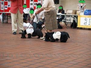 ♪カヌー犬♪