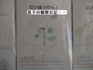 ♪観察日記♪