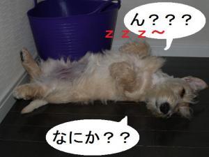 ♪ん??何か??♪