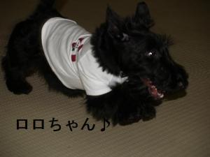 ♪ロロちゃん♪