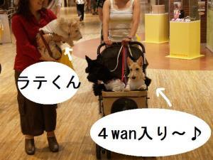 ♪4WAN入りです♪