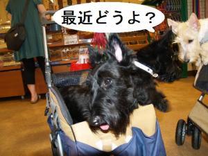 ♪最近どうよ??♪