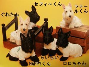 ♪集合写真犬のみ♪