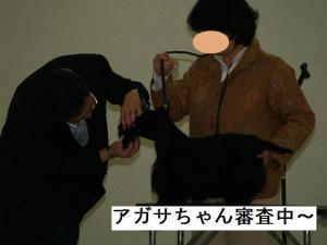 アガサちゃん審査中~♪