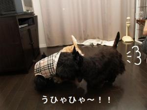 うひゃひゃ~!!!