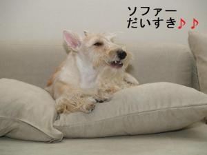 ♪ソファーだいすき♪