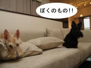♪ぼくのもの!!♪