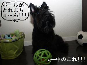 ボールがとれまちぇ~ん!!!