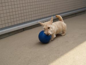 ♪ボールと遊ぶぐれ~す♪