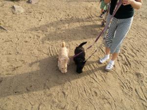 ♪やっと砂浜~♪