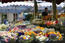 Aix-en-Provenceのフラワーマーケット